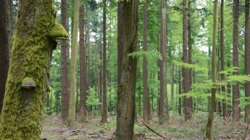Natur auf Natur - Baumpilze und Moos am Baumstamm